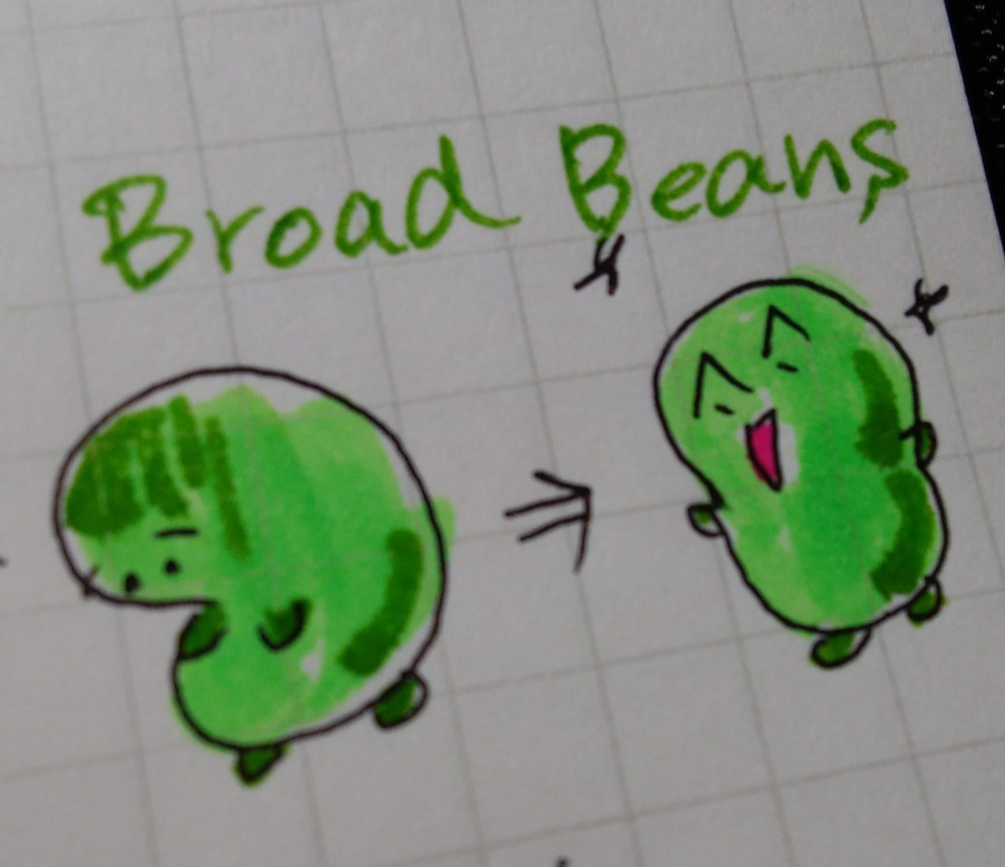 イラストで覚える英単語(1)そら豆=broad beans